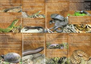 Depliant_Reptiles_Int