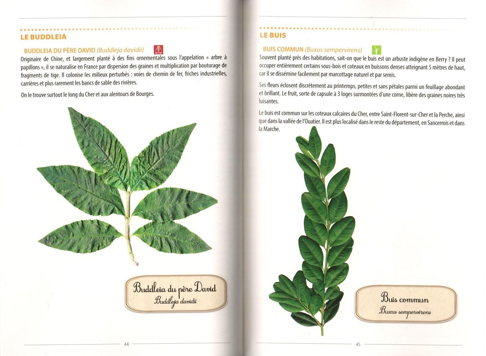 Exemple de pages intérieures. Cliquez pour agrandir.
