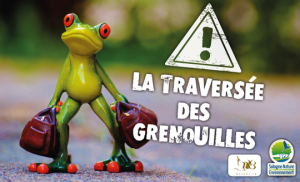 News_don_Kisskissbankbank_Traversee-Grenouille